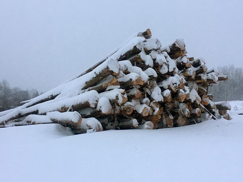Log Sales | Log and Timber Custom Fabrication | Bemidji, MN